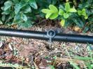 Microbewässerung an einer Hecke